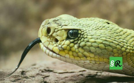 Содержание ядовитых змей в Германии разрешено