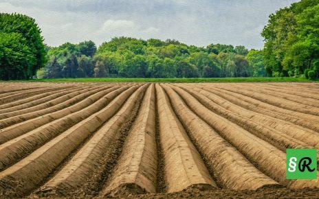 Фермерские поля спаржи в Германии