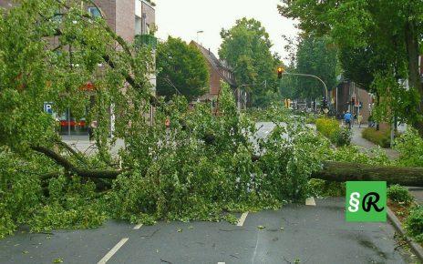 Упавшее дерево из-за урагана